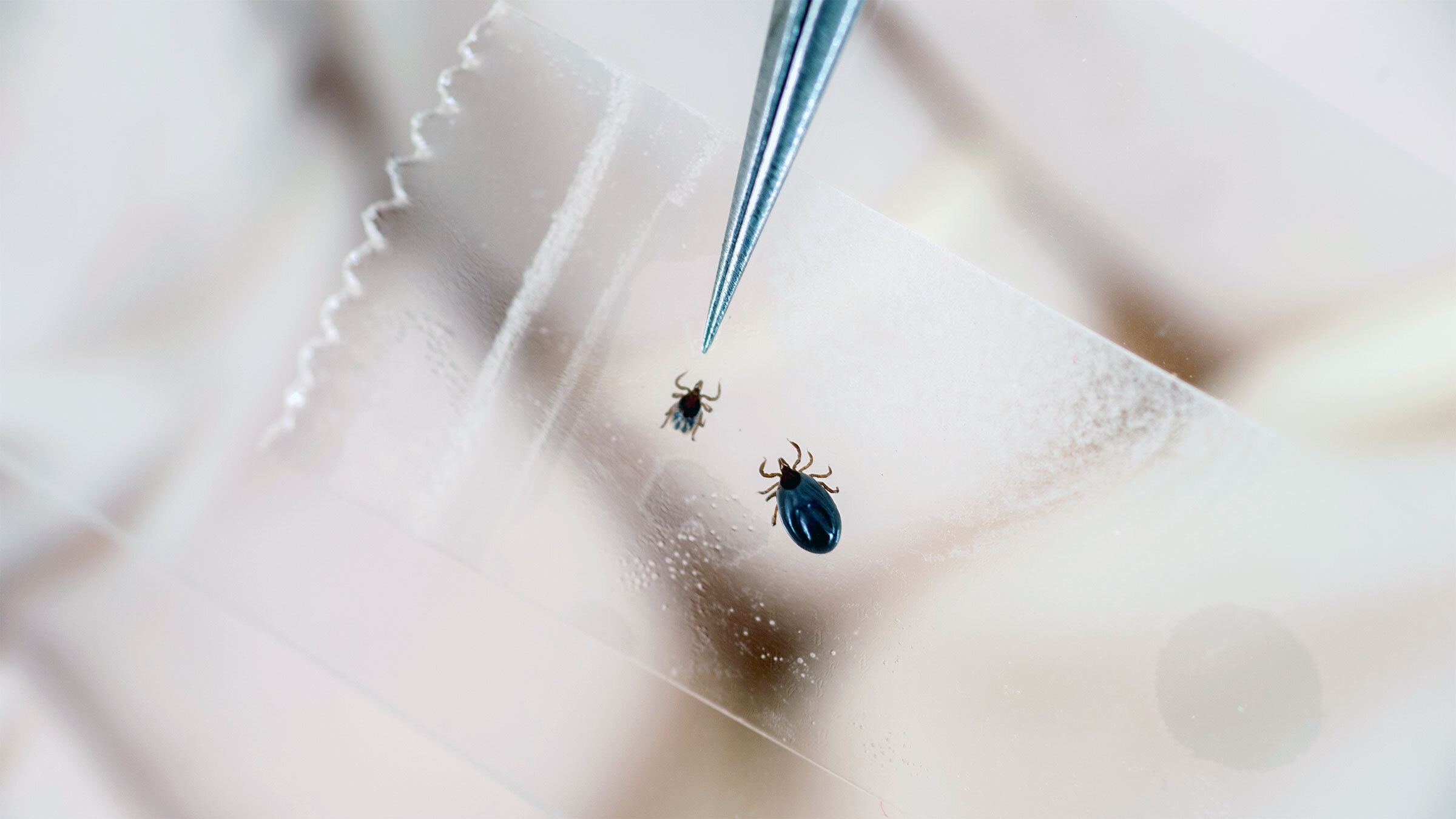 Lyme disease is the most common vector-borne illness in the United States, appearing in all 50 states and the District of Columbia. (Edwin Remsberg/VWPics via Getty Images file photo)